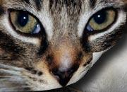 Bilder-Katzen