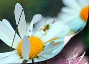 Kostenlose Bilder von Blumen Tiere und Pflanzen mit Naturfotos