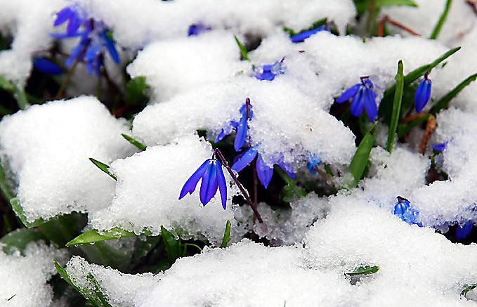 april april der wei nicht was er will mal regen mal schnee kostenlose bilder blumen. Black Bedroom Furniture Sets. Home Design Ideas