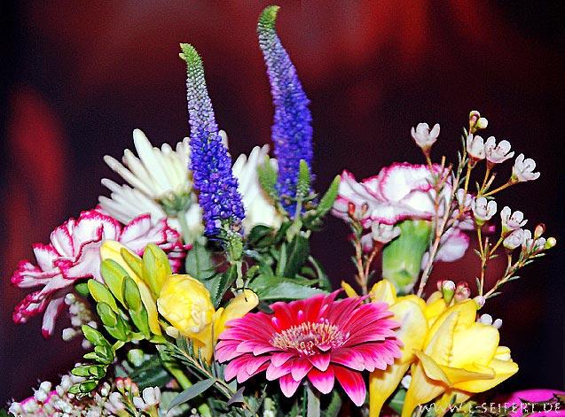 Kostenlose Bilder Blumenstrauss
