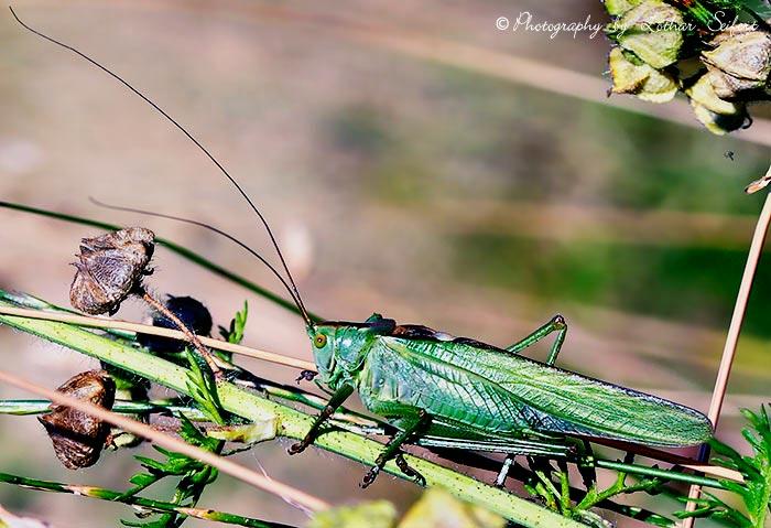 Heuschrecken vernichten oft ganze ernten in afrika oder for Fliegen in blumenerde vernichten