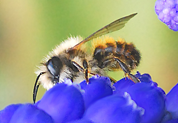 Greeting card Bienen Greetings