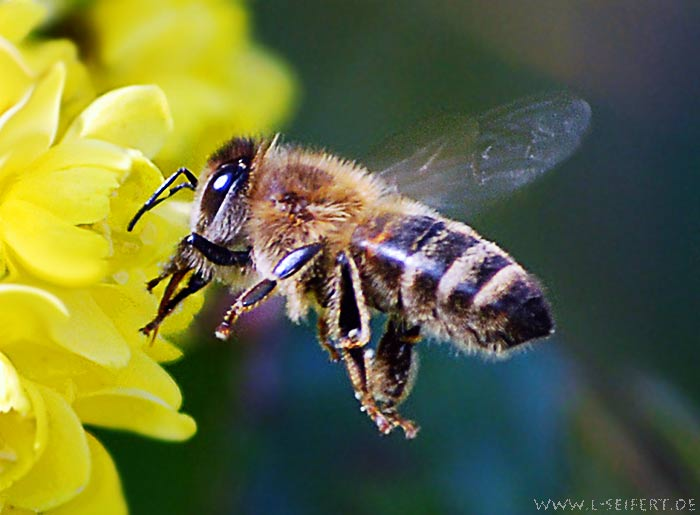 Greeting card Bienen