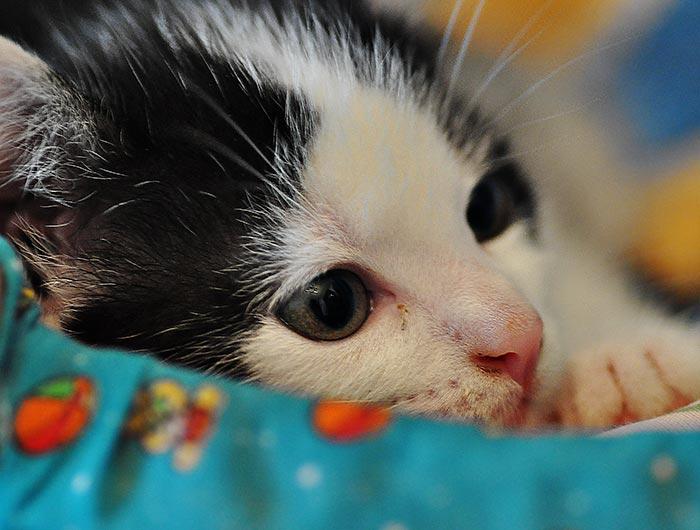 kleine katze sie tr umt mit offenen augen fotos von katzenbabys und katzen katzenbilder. Black Bedroom Furniture Sets. Home Design Ideas
