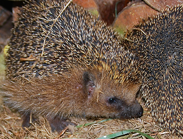 Greeting card Igel Picture