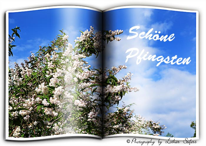 Greeting card Schoene Pfingsten
