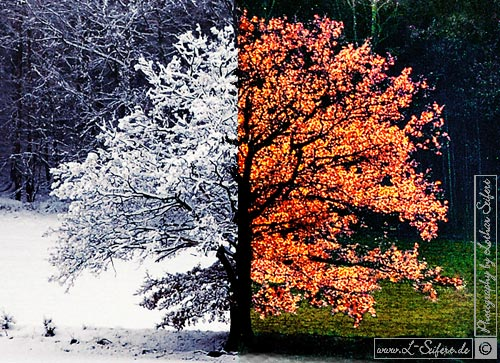 Greeting card Herbst und Winter