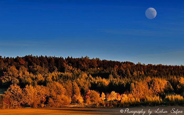Greeting card Herbstwald