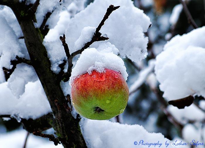 - Winteraepfel