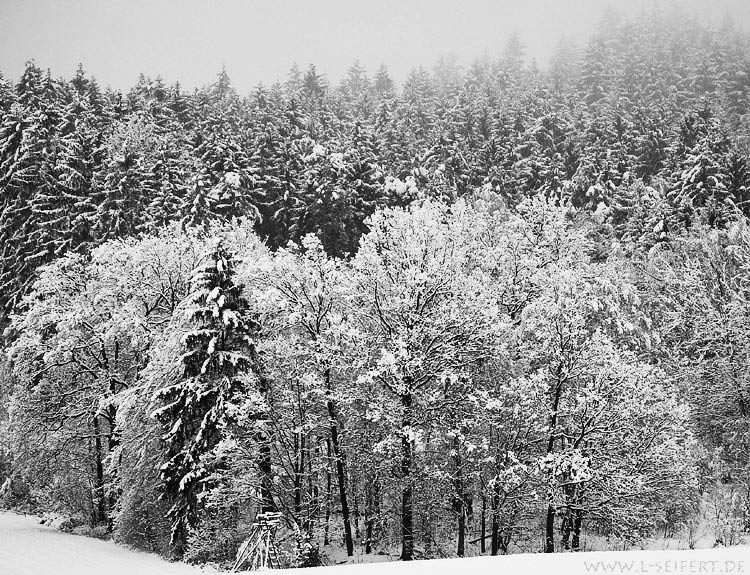 Greeting card Winterwald
